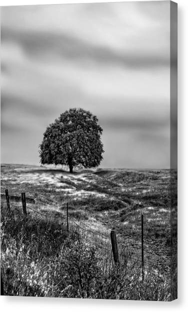 Valley Oak Majesty Canvas Print