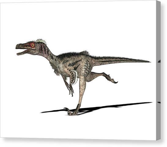 Velociraptor Canvas Print - Velociraptor Dinosaur by Friedrich Saurer