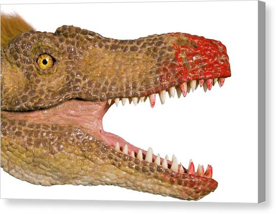 Velociraptor Canvas Print - Velociraptor Jaws Model by Natural History Museum, London/science Photo Library