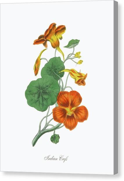 Victorian Botanical Illustration Of Canvas Print by Bauhaus1000
