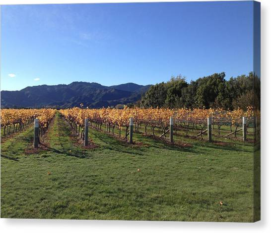 Vineyard Canvas Print by Ron Torborg