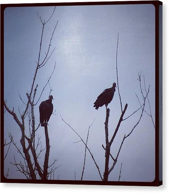 Vultures Canvas Print - #vulture #vulturesilhoutte #silhouette by Robb Needham