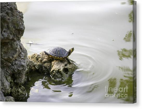 Water Turtle Canvas Print