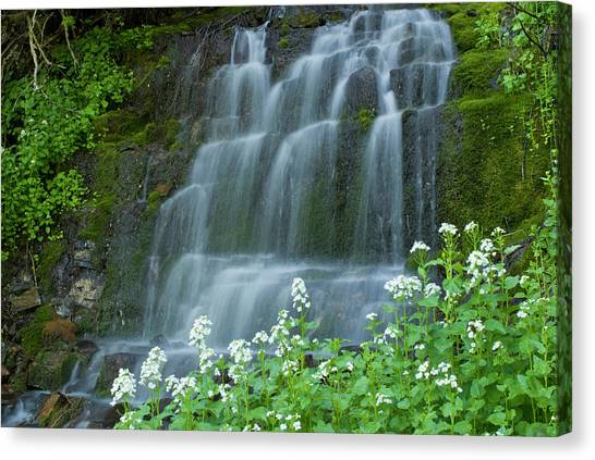 American Fork Canyon Canvas Print - Waterfall And White Wildflowers by Howie Garber