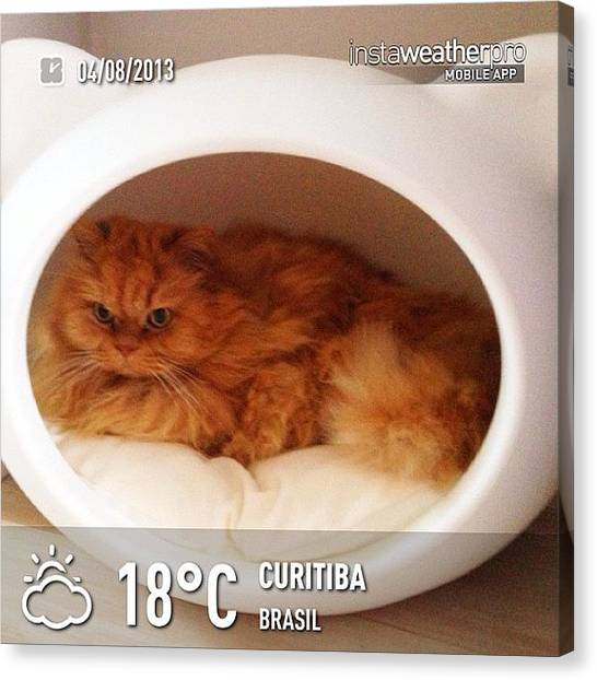 Persians Canvas Print - #weather #instaweather #instaweatherpro by Maria Cristina Antunes
