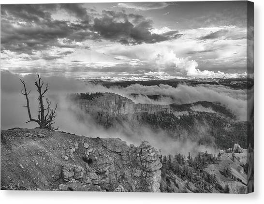 Weathered Canvas Print by Darryl Wilkinson