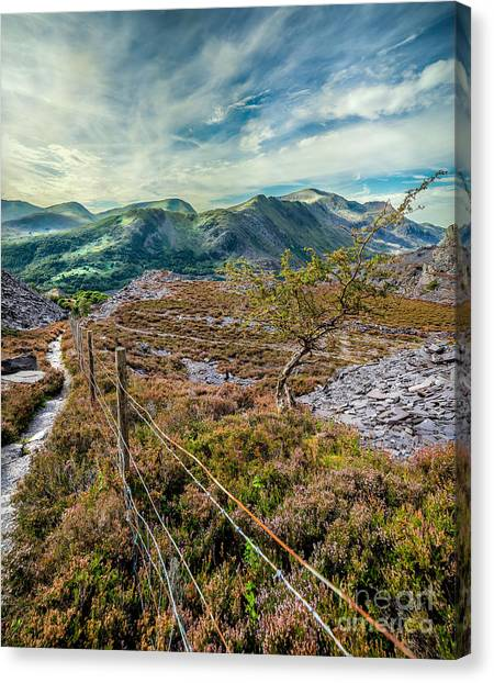 Heather Canvas Print - Welsh Mountains by Adrian Evans