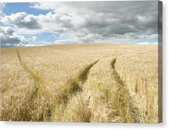 Rainclouds Canvas Print - Wheat by Gustoimages/science Photo Library