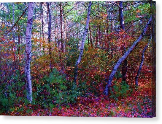 White Birch - Pocono Mountains Canvas Print