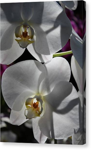 White Orchid Two Canvas Print by Mark Steven Burhart