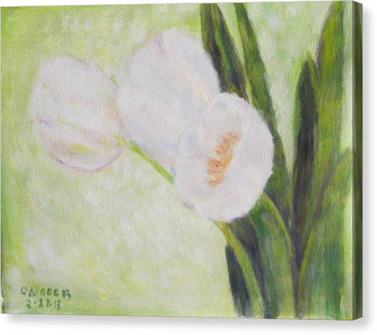 White Tulips On Stems With Foliage Canvas Print