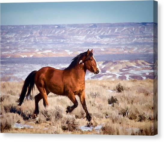 Eagle - Wild Horse Stallion Canvas Print