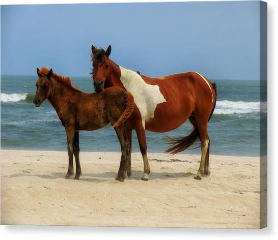 Maryland Horses Canvas Print - Wild Horses Of Assateague Island by Mountain Dreams