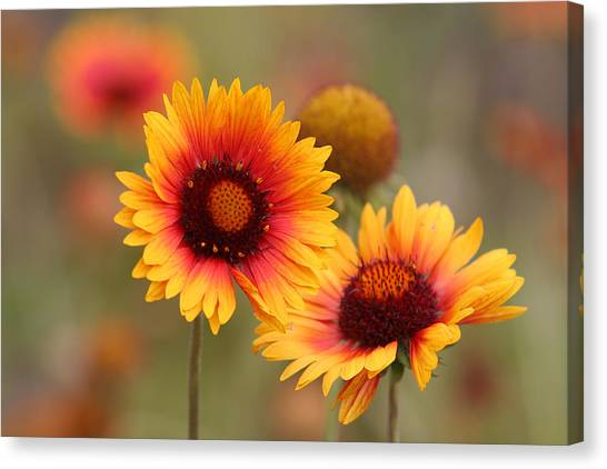 Wildflowers Canvas Print by Darryl Wilkinson