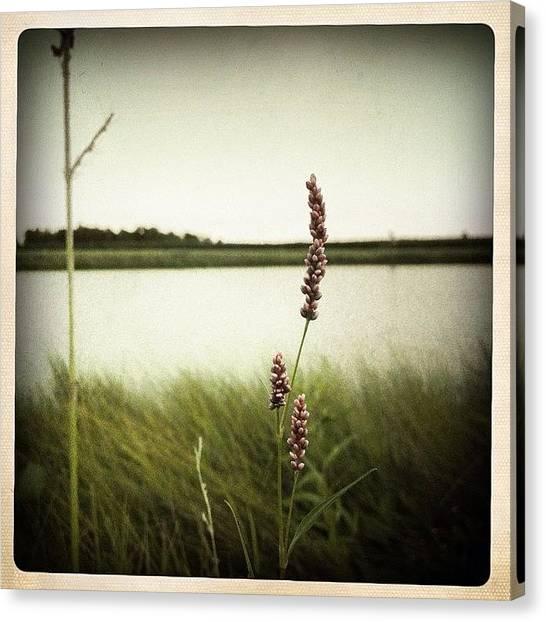 Rural Scenes Canvas Print - Wildflowers by Natasha Marco