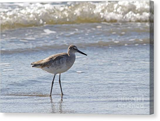 Willet Bird Wading In Ocean Surf Canvas Print