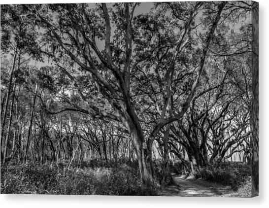 Wind Swept Trees Canvas Print