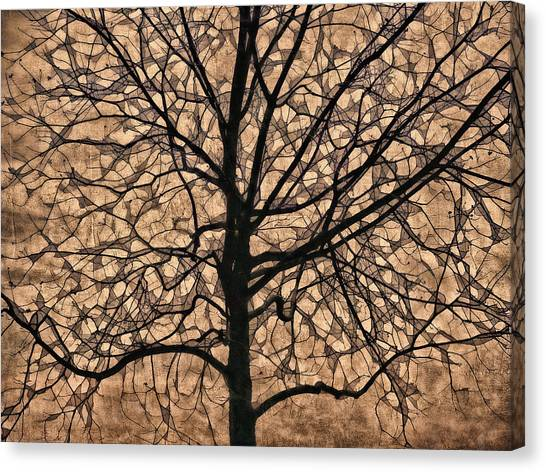 Fallen Tree Canvas Print - Windowpane Tree In Autumn by Carol Leigh