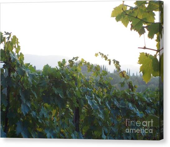 Wine Yards In Loppiano Canvas Print