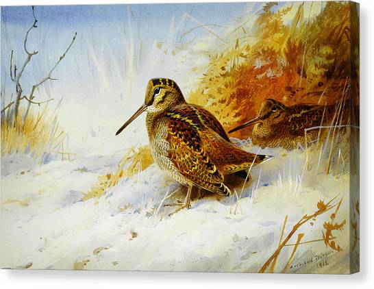 Woodcock Canvas Print - Winter Woodcock  by Celestial Images