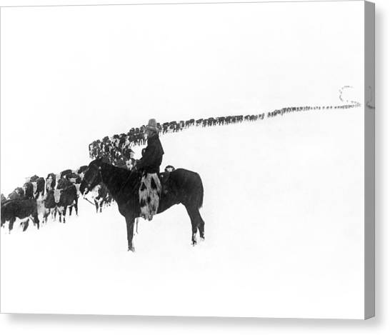 Cow Canvas Print - Wintertime Cattle Drive by Charles Belden