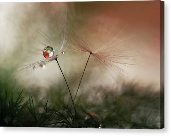 Macro Canvas Print - With And Without by Heidi Westum