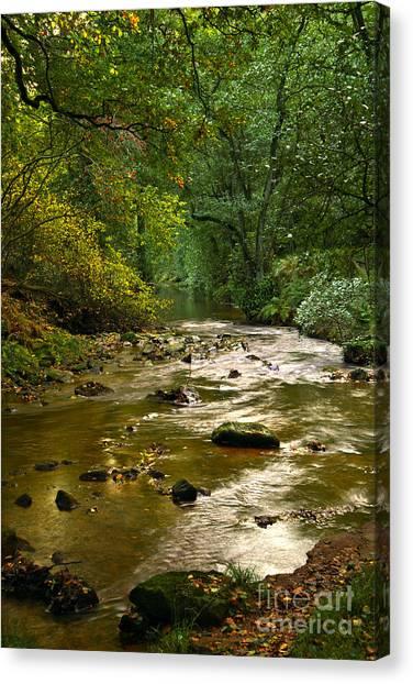 Woodland Stream In Autumn Canvas Print