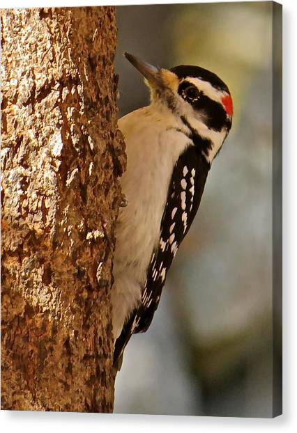 Woodpecker 109 Canvas Print by Patsy Pratt