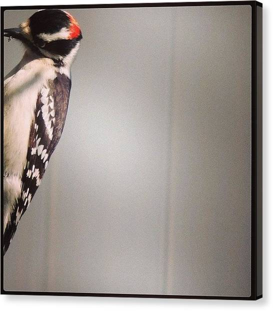 Woodpeckers Canvas Print - #woodpecker #bird #birds #bestbirds by Robb Needham