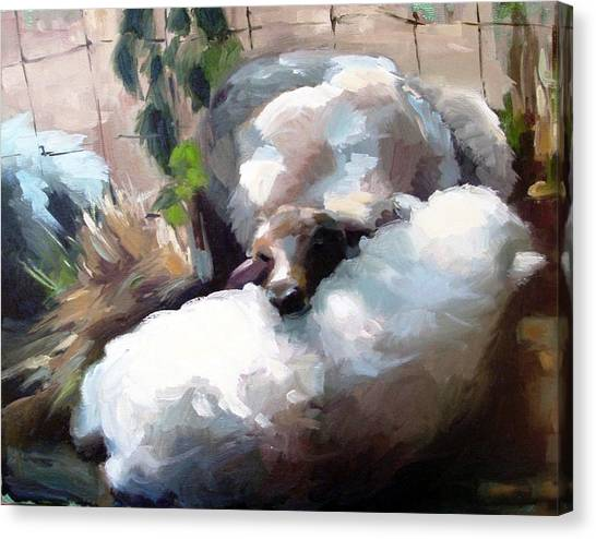 Wool Pillow Canvas Print
