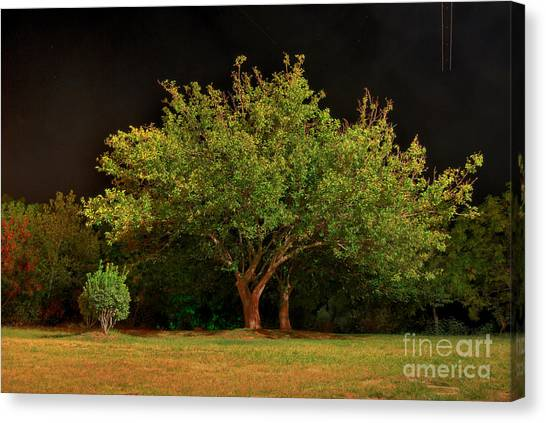 Young And Old - Summer Canvas Print