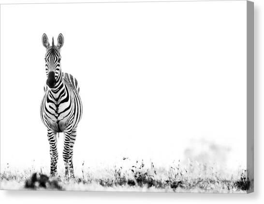 Rhinocerus Canvas Print - Zebra Facing Forward Washed Out Sky Bw by Mike Gaudaur