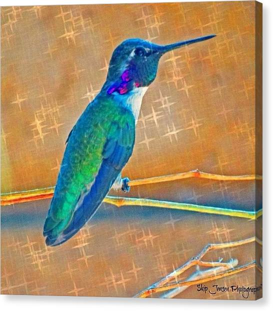 Hummingbirds Canvas Print - #coolshot #coolpic #awesome #amazing by Skip Jensen