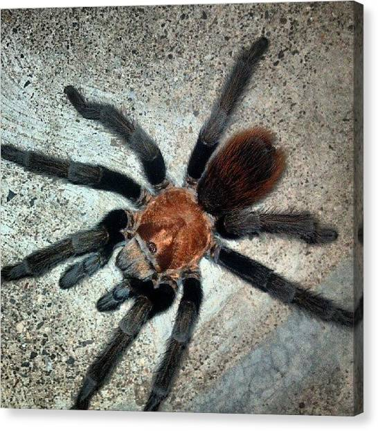 Spiders Canvas Print - Instagram Photo by Aaron Kremer