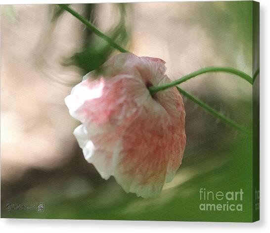 Pretty Pink Poppy Macro Canvas Print - Poppy From The Angel's Choir Mix by J McCombie