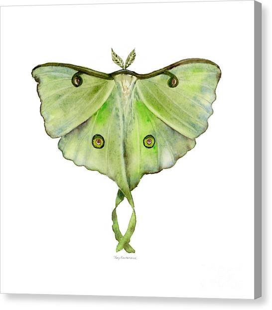 100 Luna Moth Canvas Print