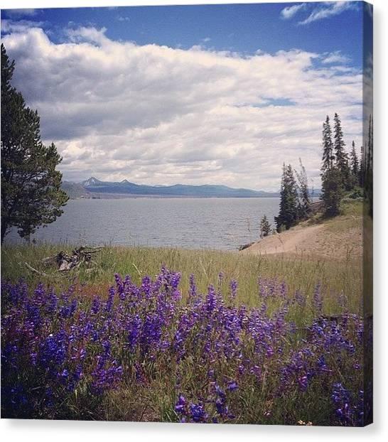 Yellowstone National Park Canvas Print - #100happydays  by Katherine Stevens