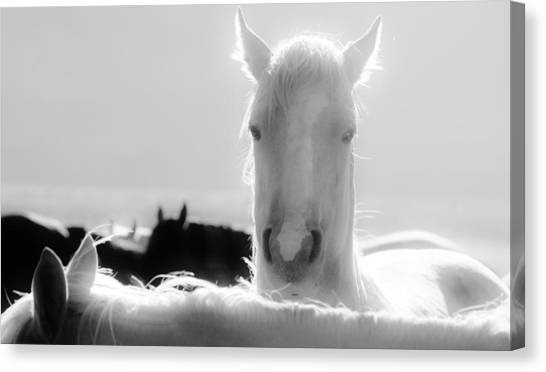 109 Canvas Print by Wynema Ranch