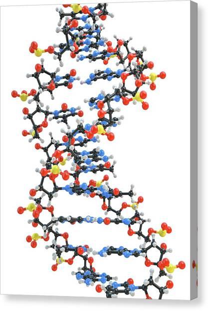Molecular Biology Canvas Print - Dna Molecule by Maurizio De Angelis