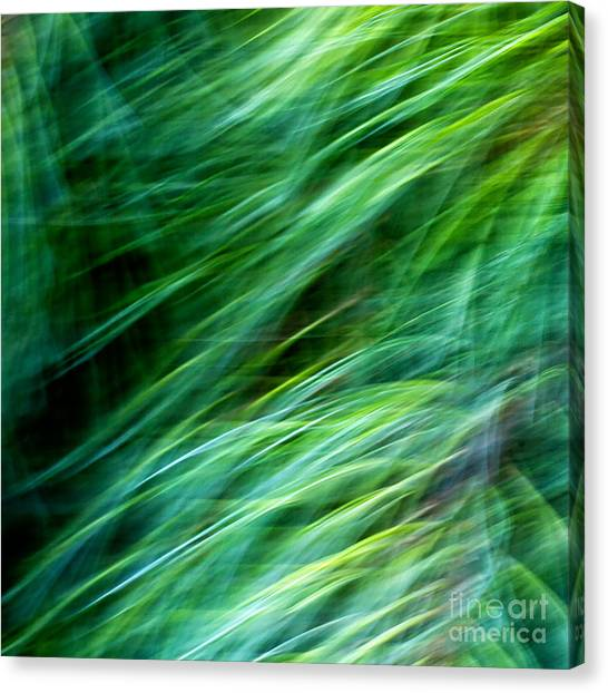 Meditations On Movement In Nature Canvas Print