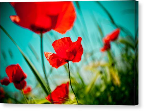 Poppy Field And Sky Canvas Print