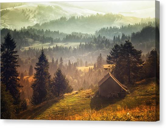 Fir Trees Canvas Print - Untitled by Stanislav Hricko