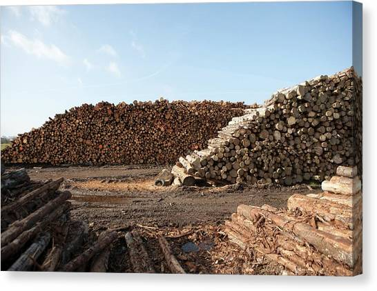 Wood Chip Fuel Production Canvas Print by Lewis Houghton/science Photo Library