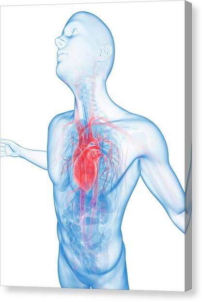 Human Vascular System Canvas Print by Sebastian Kaulitzki