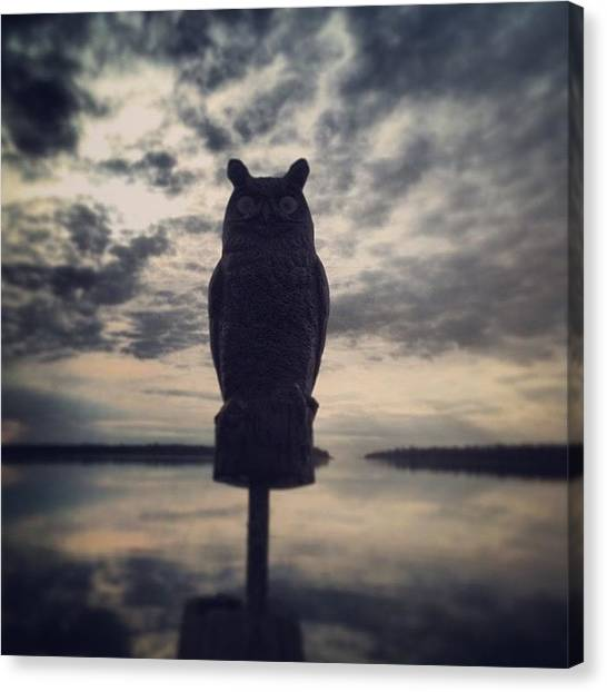 Owls Canvas Print - Instagram Photo by Sam Whitley