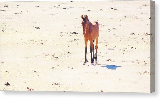 116 Canvas Print by Wynema Ranch