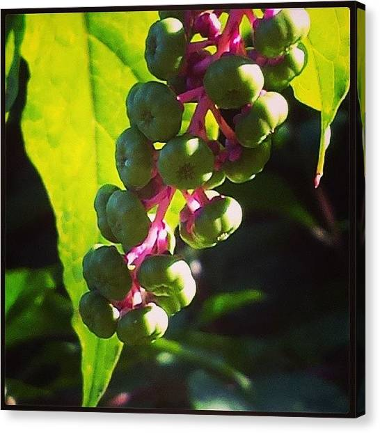 Wild Berries Canvas Print - Wild Berries by Laura Doty