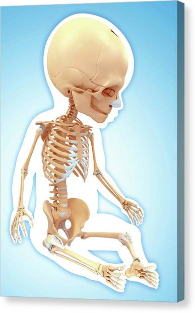 Baby's Skeletal System Canvas Print by Pixologicstudio