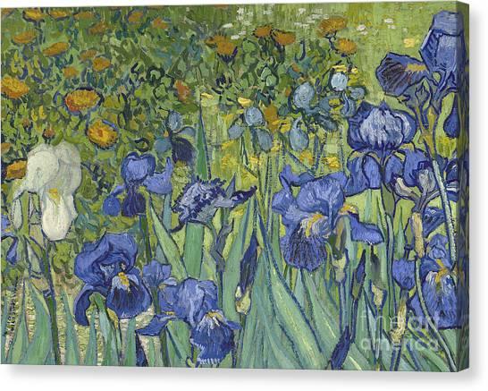 Post-impressionism Canvas Print - Irises by Vincent Van Gogh