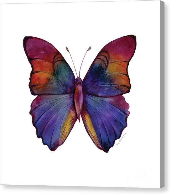 13 Narcissus Butterfly Canvas Print